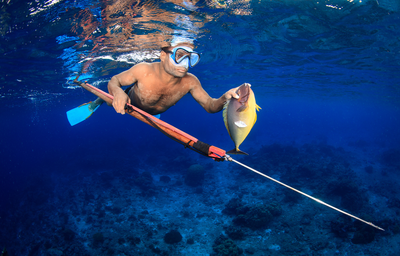 A villager returns to his canoe with a unicornfish (Naso hexacanthus) he has speared using a handmade speargun. Spearfishing is popular in the Manus Province of Papua New Guinea as it is highly selective.
